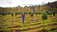An Essex Christmas Tree Farm Battles Flood Damage