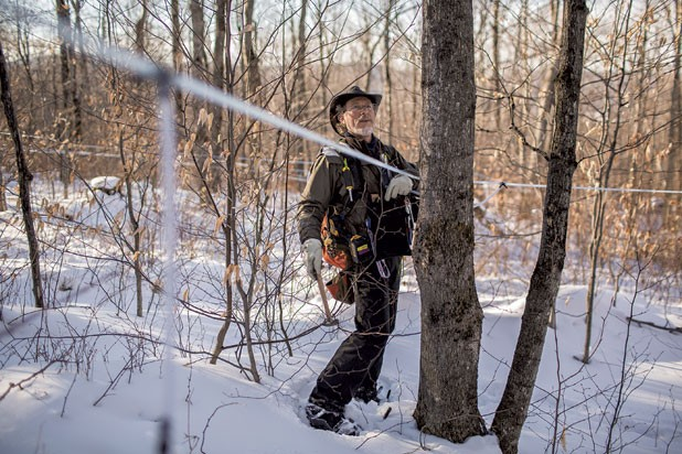 Brian Merrill of Thunder Basin Maple Works taps maple trees in Cambridge.