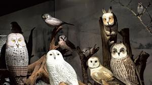 Carved birds by Bob Spear