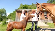 Itty-Bitty Equines