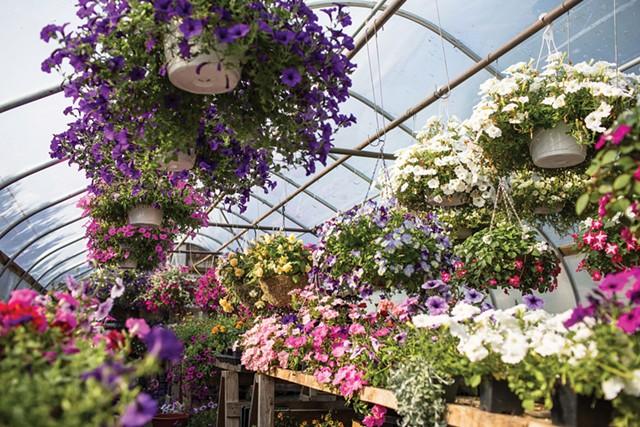 Claire's Greenhouse - OLIVER PARINI