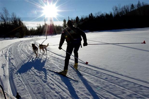 f-skijoring-1.jpg