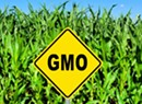 Court Will Not Issue Injunction to Block GMO Law