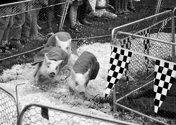 618-pig-race.jpg