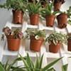 DIY: How To Make a Vertical Garden