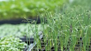Farm Share: Transplanting Season at Jericho Settlers Farm