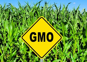 Food Giants Sue to Block Vermont's GMO Labeling Law