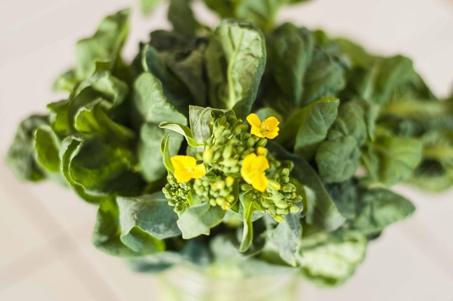 Fresh mustard greens from Jericho Settlers Farm - HANNAH PALMER EGAN