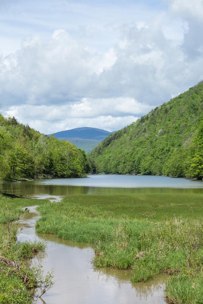Gillett Pond - OLIVER PARINI