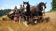 Green Mountain Draft Horse Field Day [233]