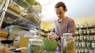 Herbalist Guido Masé Cross-Pollinates Modern Medicine and Traditional Remedies