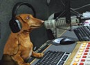 What a Wiener! Hobbes the Dachshund Transforms Talk Radio in Vermont
