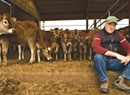 """Dairy Don't:  A Dogged Ag Activist Takes Aim at Vermont's """"Sacred Cow"""""""