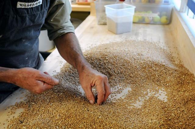 John Mellquist separating grain