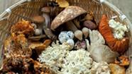 Late Summer Mushroom Hunting