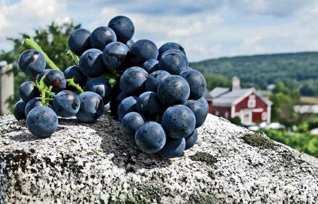Lincoln Peak Vineyard - PHOTOS COURTESY OF SARA GRANSTROM