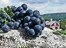 Celebrate Harvest Time at a Vermont Winery