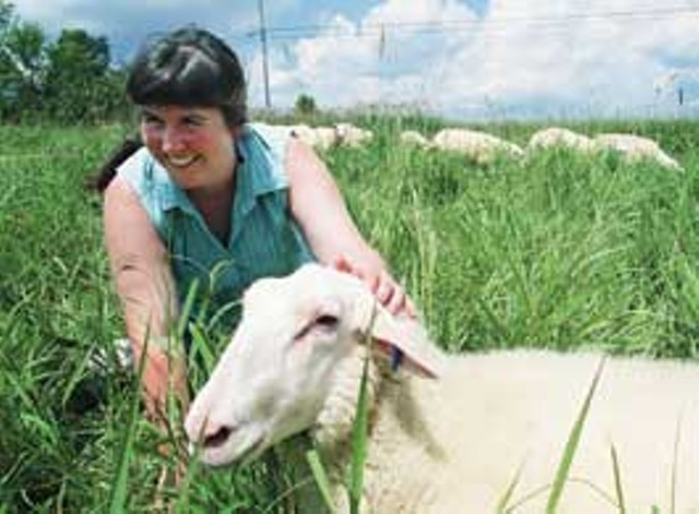Linda Faillace with her controversial sheep