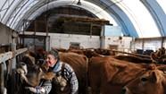 Raw Deal? Farmers Push Back Against Unpasteurized Milk Regulations