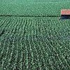 Local Ag Advocates Denounce Federal Farm Bill Provision