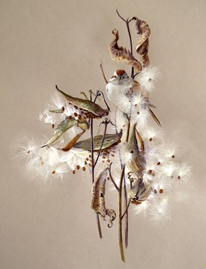 """Milkweed and Tree Sparrow,"" by Susan Bull Riley - COURTESY OF SUSAN BULL RILEY"