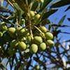 Oil & Vinegar Dispensary to Open in Montpelier