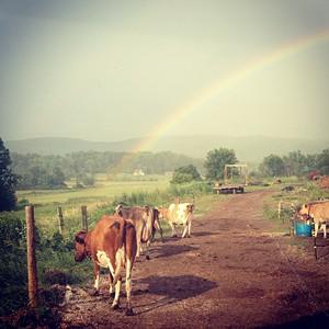 8f50d428_rainbow_2.jpeg