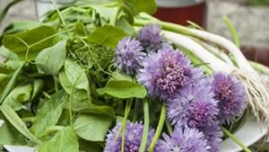 Pea shoots, blooming chives and green garlic