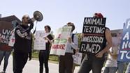 Protestors Decry UVM's Use of Live Pigs in Surgeons' Training Program