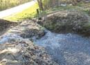 Rain Gardens Sop Up Stormwater Runoff