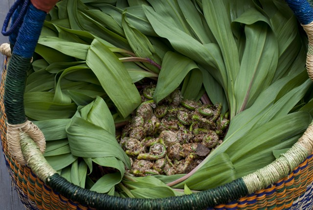 Ramps, glorious ramps! - HANNAH PALMER EGAN