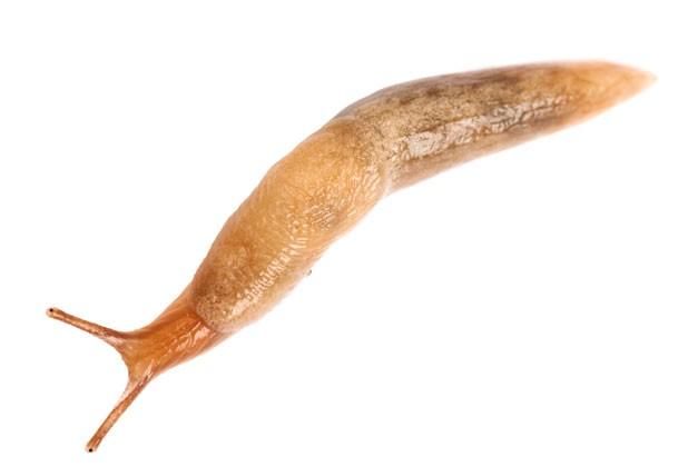 f-fears-slug.jpg