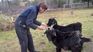 Getting Your Goat