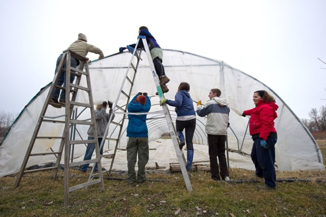 Skinning a greenhouse at Adam's Berry Farm - ANDY DUBACK