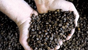 Small Coffee Roasters Look to Expand in Keurig Green Mountain Country