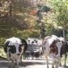The Corse Farm [SIV194]
