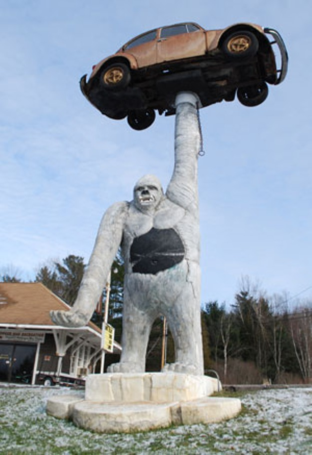 whats   giant gorilla holding  volkswagen tourism  days vermonts