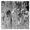 Album Review: Ver Sacrum, 'Stirrings Still'
