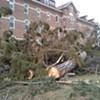 Cambrian Falling: Trees Felled at Burlington Development Site