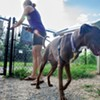 Fetching and Kvetching: A Dog Park Annoys Some of Its Neighbors