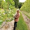 Branch Out Burlington's Re-Leaf Effort