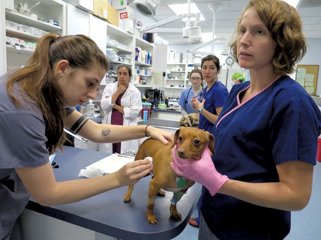 Emergency technicians Keely Doyle and Christina Surprenant doing tests on Luna, a Chihuahua who came in with a gastrointestinal problem - MATTHEW THORSEN