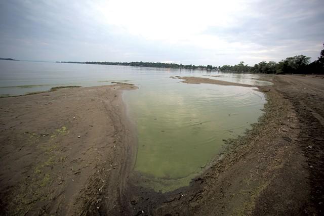 Blue-green algae in St. Albans Bay - JAMES BUCK