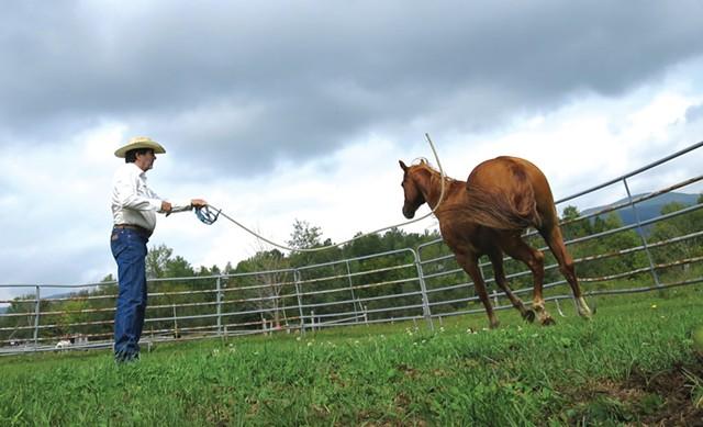 Hayes swinging a rope in Austin's direction to make him trot - MATTHEW THORSEN