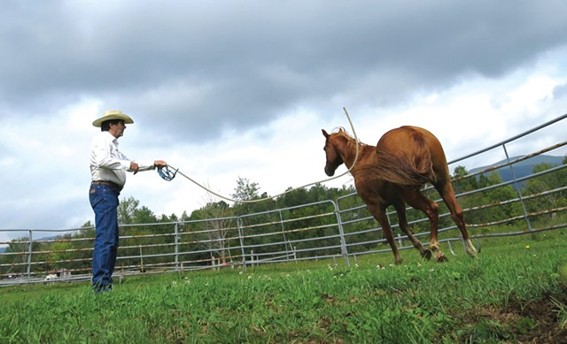 Hayes swinging a rope in Austin's direction to make him trot - MATTHEW THORSEN