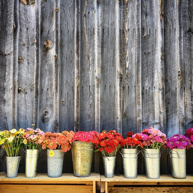 COURTESY OF STRAY CAT FLOWER FARM