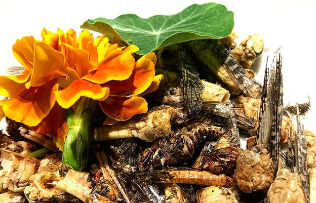 A bowl of grasshoppers at Isole Dinner Club's Beatrix Potter-themed meal - SUZANNE M. PODHAIZER