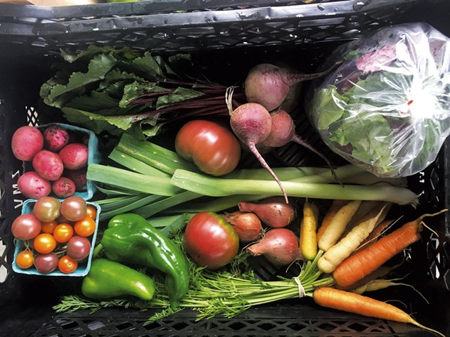 Large summer CSA share at 1000 Stone Farm in Brookfield - COURTESY OF 1000 STONE FARM