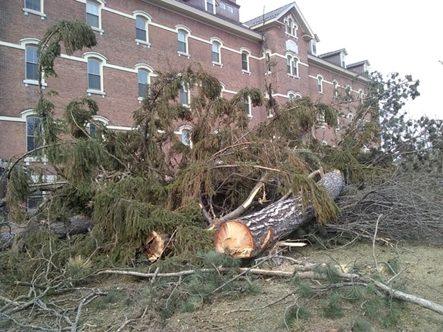 Trees felled in front of Liberty House - KATIE JICKLING