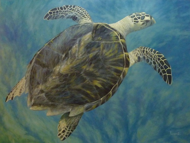 """""""Hawksbill Sea Turtle"""" by Susan Parmenter - IMAGES COURTESY OF THE GALLERY AT CENTRAL VERMONT MEDICAL CENTER"""